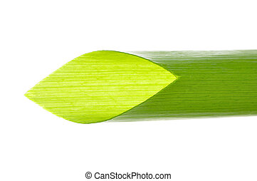 Scallion - Macro closeup of diagonally cut scallion green...