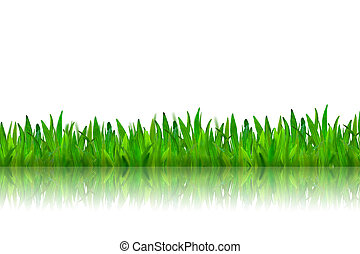Isolated green grass with reflection on white background