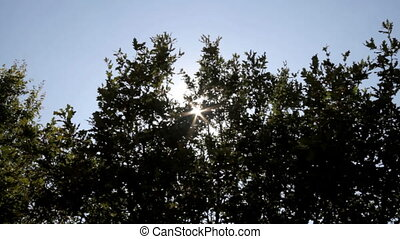 sun ray in tree