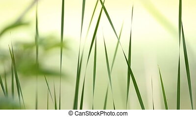 Serene Grass - Beautiful, mellow clip of serene grass moving...