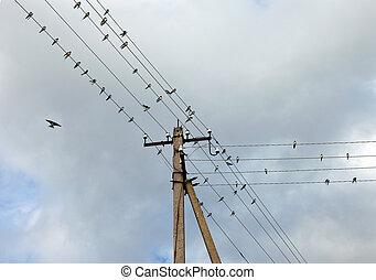 alambres, eléctrico, cielo, golondrinas, contra, nublado