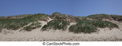 panorama of dutch dunes with blue sky