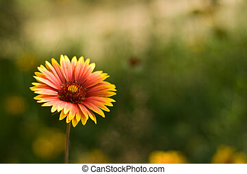 Summer flower - Beautiful yellow summer flowers background