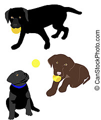 Lab puppies playing ball - Black and chocolate lab puppies...
