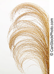 pampas grass - Close up of pampas grass