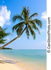 Beautiful palm tree over white sand beach - Dream scene....