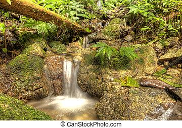 Waterfall in Jungle, Malaysia - Jungle Waterfall in Cameron...