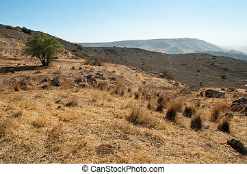 Galilee North Israel - Landscape Of North Galilee In Early...