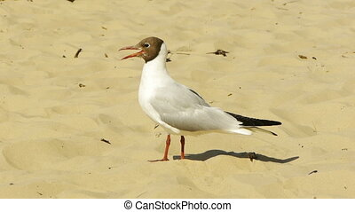 HD - seagull on the beach_scene1