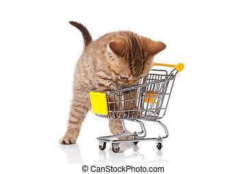 british cat with shopping cart isolated on white kitten...