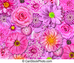 Pink Flower Background. Selection of Various Isolated Pink...