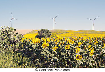 Sunflower field with severals trees in the background under...