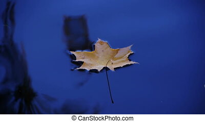 HD - Maple leaf is traveling to the waterfall_scene02