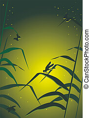 dragonfly in a grass