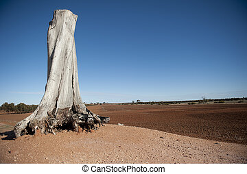 Dead Tree Outback Background