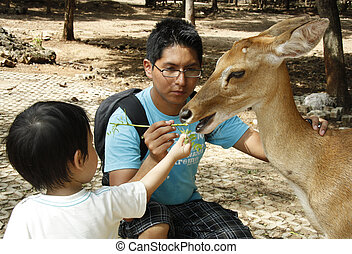 Happy People feeding a deer - Happy young man and a child...