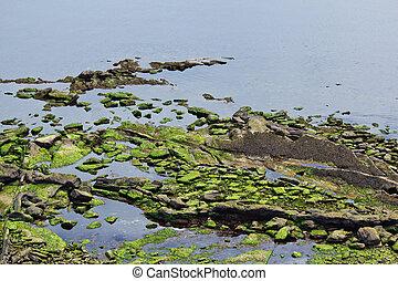 Calm Seascape with algae covered rocks
