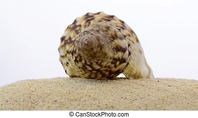 Rotating shell - Closeup of rotating shell and beach sand...