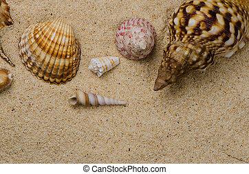 Seashells on the sand  - Closeup of seashells on the sand