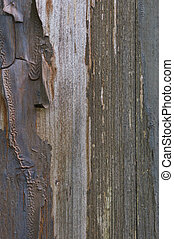 Old aged weathered grunge color-peel wood texture, detailed vertical macro closeup of natural textured grain grungy painted wooden 