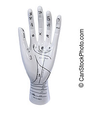Palm Reading Hand Model - A ceramic palm reading hand model...