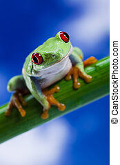 Frog and blue sky - Frog - small animal with smooth skin and...