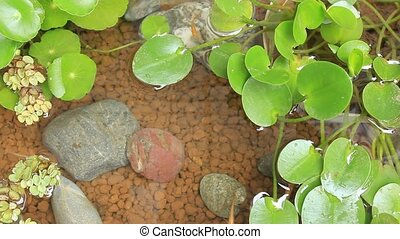 killifish breeding - These are killifishs keeping with a...