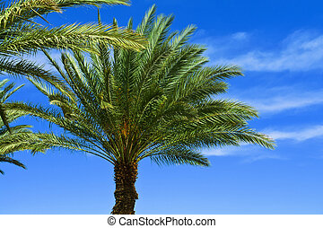 Tropical Palm trees - Beautifu lTropical exotic Palm trees...