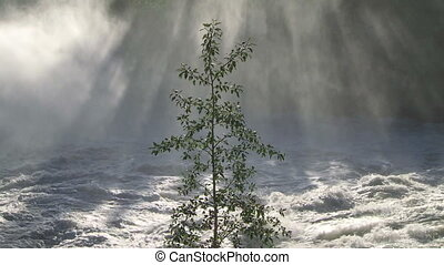 River Mist and Tree 01