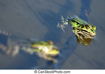 A Green frog protruding from the w