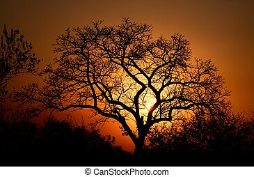 African Sunset - The silhouette of a tree as the sun sets...