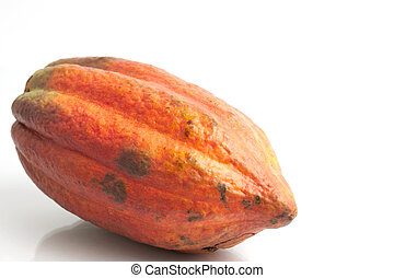 Red cocoa - fruit of cocoa on white background