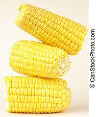 fresh corn vegetable  on white background