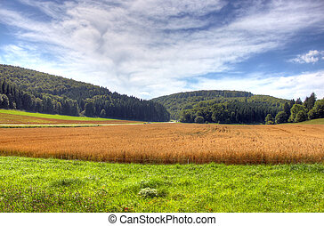 Field, meadow with blue sky and clo - different kind of...