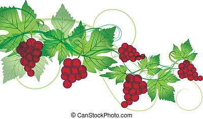red grapes - Decorations of red grapes on a white background