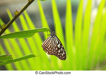 Butterfly Garden - Penang - Butterfly Garden in Penang,...
