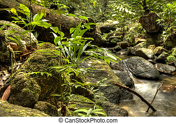 Fresh Water in Jungle - Jungle river flowing