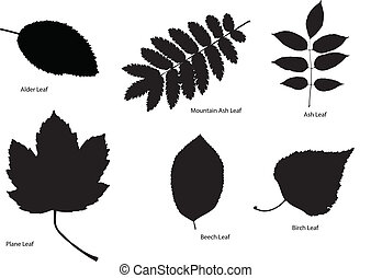 Tree Leaf Silhouettes - Six different kinds of tree leaf...