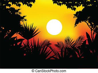 beauty jungle at night