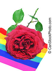 red rose on a rainbow flag