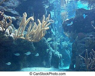 Where Mermaids Play