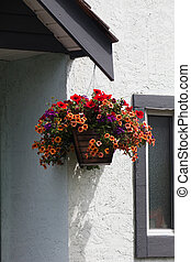 Hanging Flower Basket and white wall