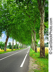 French country road - Country road lined with sycamore trees...