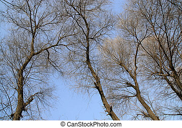 branches in the blue sky