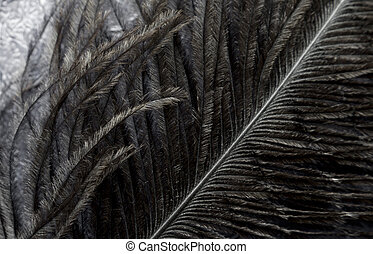 Close up of black feather