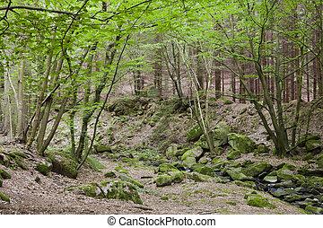 The primeval forest with mossed rocks