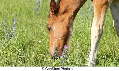 Beautiful foal pasture