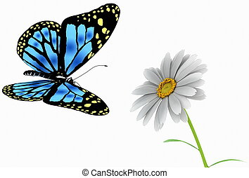 butterfly and daisy on white background