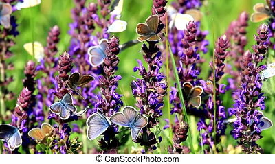 Many butterflies eating together