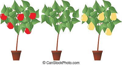 fruit plant - illustration of fruit plant with brown pot